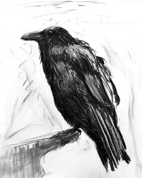 Resting Raven