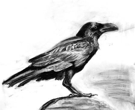 Raven on Rock