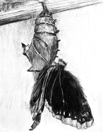 Butterfly Hatchling